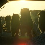 Where The Wild Things Are Teaser