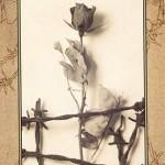 Book Review: Briar Rose